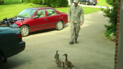 Stock Video Footage of compassion soldier feeding ducks feed