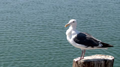 seagull on piling ocean in background cutaway transition nature beauty - stock footage