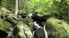 Video of a small creek in a forest Stock Footage