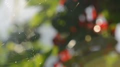 Spiderweb in the wind Stock Footage