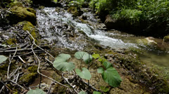 Creek flowing through the forest Stock Footage