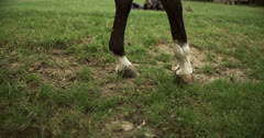 Horse 2 Stock Footage