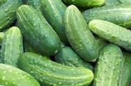 Stock Photo of pile of fresh green cucumbers