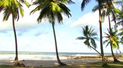 Palms on Resende Beach in Itacare, Brazil Stock Footage