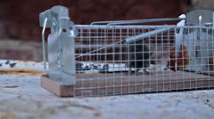 Mouse in a trap Stock Footage