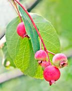 Lovely Red Berries Stock Photos
