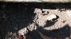 Vanity ants - stock footage