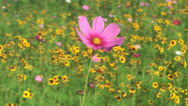 Stock Video Footage of Flowers field of flower