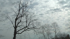 Clouds move rapidly past a barren tree Stock Footage