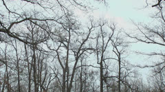 Clouds and barren trees Stock Footage
