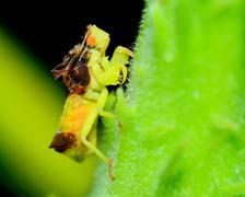 ambush bug - stock photo