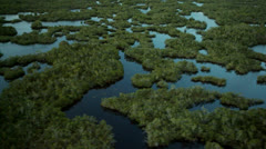 Overhead View of Beautiful Everglades - stock footage