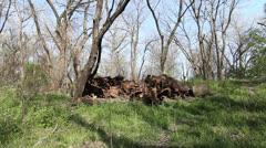 Kansas Big Blue River flood plain trash c Stock Footage