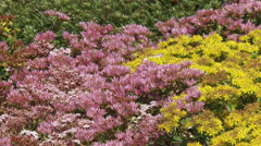 Sedum in bloom full screen + swift zoom out green roof city center Stock Footage