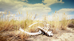 Skeleton in Desert Stock Footage