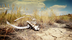 Skeleton in a desert dry place. Stock Footage