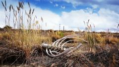 Desert skeleton crane shot Stock Footage