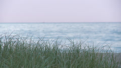 Dune Grass 04L Stock Footage