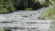 Stock Video Footage of Powerfull Forest River