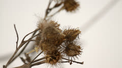 Burdock in the meadow in winter Stock Footage