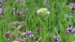 Kansas Prairie flowers ct Stock Footage