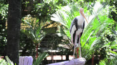 Painted stork on the branch Stock Footage
