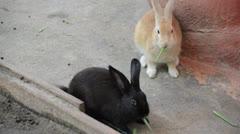 Two rabbit bunnys Stock Footage