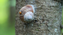 Ladybird in forest episode 4 Stock Footage