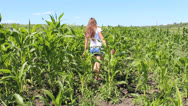 Stock Video Footage of girl in the corn field