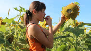 Stock Video Footage of girl in sunflowers field