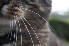 Cat Whiskers - stock photo