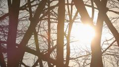 Sunset in winter, sun rays through tree branches without leaves in the park Stock Footage