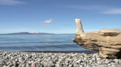 Old tree log laying on lake shore Stock Footage