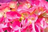 Stock Photo of pink and yellow