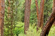 Dense Forest View Stock Photos