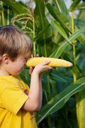 little boy holding corn on his nose - stock photo