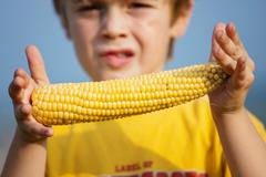 Little boy holding corn on the cob Stock Photos
