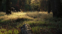 ForestMeadowLeft Stock Footage