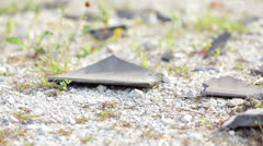 Broken Roof Tiles on The Ground Stock Footage