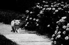 Stock Photo of small kitten walking along garden path.