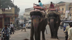 MARKET, JAIPUR, INDIA - JANUARY  01, 2013:  Elephant walking on the street. - stock footage