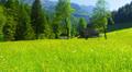 POV, walking on alpine fields toward farm. Steadycam. Austria. HD Footage
