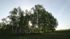 Beautiful birch wood and shiny sun spread beams Stock Footage