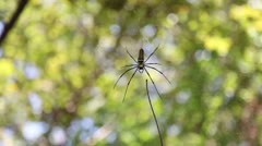 Spider in jungle Stock Footage