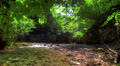 Forest River. HDR Time Lapse Shot Motorized Slider Footage