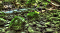 Moss-Covered Boulders. HDR Time Lapse Shot Motorized Slider Footage