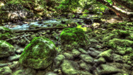 Stock Video Footage of Moss-Covered Boulders. HDR Time Lapse Shot Motorized Slider