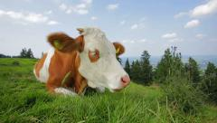 Brown cow grazing alps 2/2 Stock Footage
