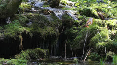 Stock Video Footage of Splendid scenery fresh river water fall in green forest
