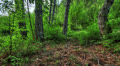 Forest at dawn. HDR Time Lapse Shot Motorized Slider Footage